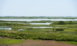 Våtmarker i sydliga nya Jeresy Royaltyfria Bilder