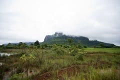 Våtmarker och grön skog Arkivbilder