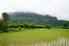 Våtmarker och grön skog Arkivfoton
