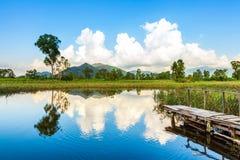 Våtmarker och grön skog royaltyfri fotografi