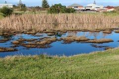 Våtmarker på det stora träsket Bunbury västra Australien i sen vinter. Royaltyfria Foton