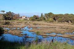 Våtmarker på det stora träsket Bunbury västra Australien i sen vinter. Arkivbilder