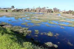 Våtmarker på det stora träsket Bunbury västra Australien i sen vinter. Royaltyfri Bild