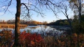 Våtmarker under höst Arkivfoto