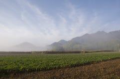 Våtmarkmorgon Fotografering för Bildbyråer