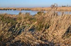Våtmarknaturen reserverar den gröna Jonkeren. Royaltyfri Bild