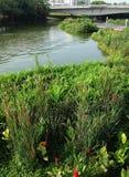 Våtmarknaturpark i staden royaltyfri foto