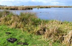 Våtmarknaturreserv den gröna Jonkeren. Arkivbilder