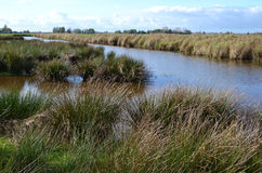 Våtmarknaturreserv den gröna Jonkeren. royaltyfri foto