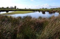Våtmarknaturreserv den gröna Jonkeren. Royaltyfria Bilder