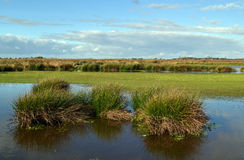 Våtmarknaturreserv den gröna Jonkeren. arkivbild