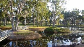 Våtmarkreflexioner Fotografering för Bildbyråer