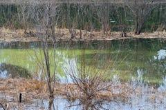 Våtmarkskog Arkivfoton