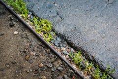 Vått asfalt och gräs arkivbilder