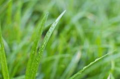 vått detaljgräs Royaltyfri Bild