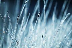 vått gräs Royaltyfria Bilder