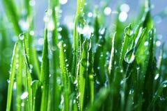 vått gräs Fotografering för Bildbyråer