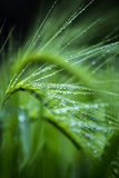 vått gräs Royaltyfria Foton