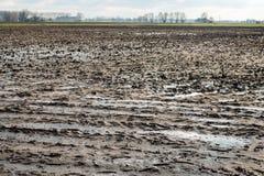 Vått lerafält med pölar av regn för vatten tack vare Royaltyfri Fotografi