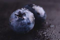 Vått nytt blåbär arkivbild