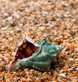 Vått snäckskal på sand fotografering för bildbyråer