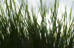 Vått soligt gräs Fotografering för Bildbyråer
