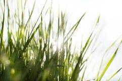 Vått soligt gräs arkivbilder