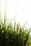 Vått soligt gräs royaltyfri foto