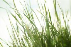 Vått soligt gräs royaltyfria bilder