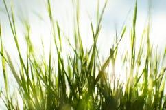 Vått soligt gräs royaltyfria foton