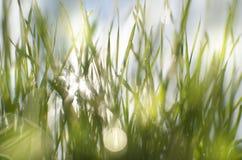 Vått soligt gräs royaltyfri fotografi