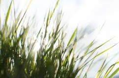 Vått soligt gräs arkivbild