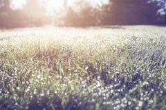 Vått sommargräsplanfält på soluppgång Royaltyfri Foto