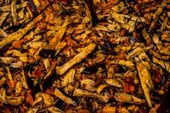 Vått trä i skogen arkivfoto