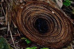 Végétation à la plage rouge de grenouille, del Toro, Panama de Bocas Photographie stock