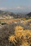 Végétation épineuse près d'Argiro, Evia, Grèce Photographie stock libre de droits