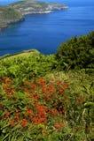 Végétation Photo libre de droits