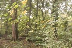 végétation Image libre de droits