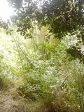 Végétation abondante Images libres de droits