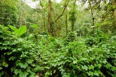 Végétation abondante dans la forêt Photographie stock