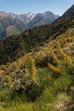Végétation alpine dans des chaînes de Kaikoura Images stock