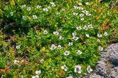Végétation côtière en Norvège Images stock