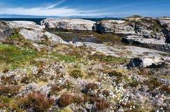 Végétation côtière en Norvège centrale Photos libres de droits