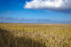 Végétation côtière sur l'île de Sylt photographie stock libre de droits