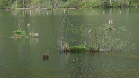 Végétation dans l'eau de lac banque de vidéos