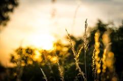 Végétation de Blury Photos stock