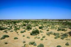 Végétation de désert Photo stock