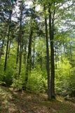 Végétation de montagne photos libres de droits
