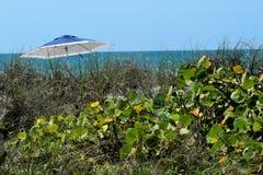Végétation de plage Photographie stock