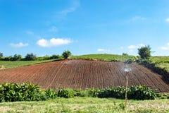 Végétation de terres cultivables sur les collines images libres de droits